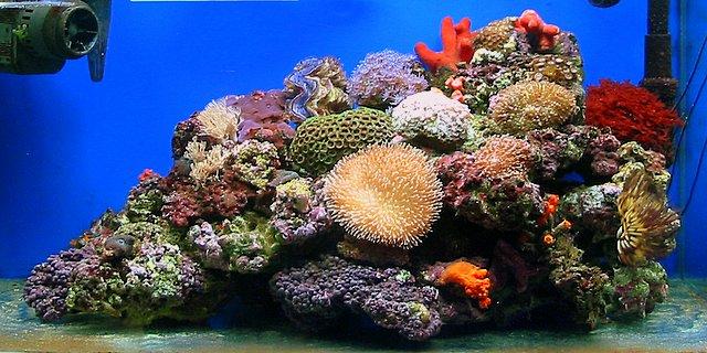 手指印画海洋世界