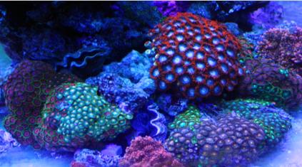 壁纸 动物 海底 海底世界 海洋馆 水族馆 鱼 鱼类 423_235