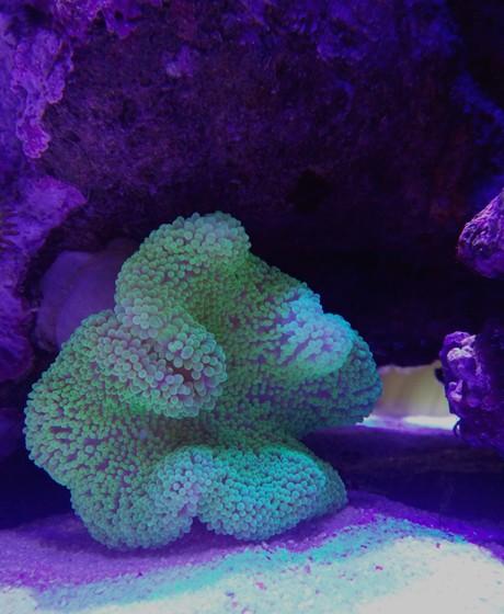 壁纸 海底 海底世界 海洋馆 水族馆 桌面 460_560