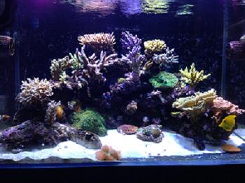 壁纸 海底 海底世界 海洋馆 水族馆 350_262