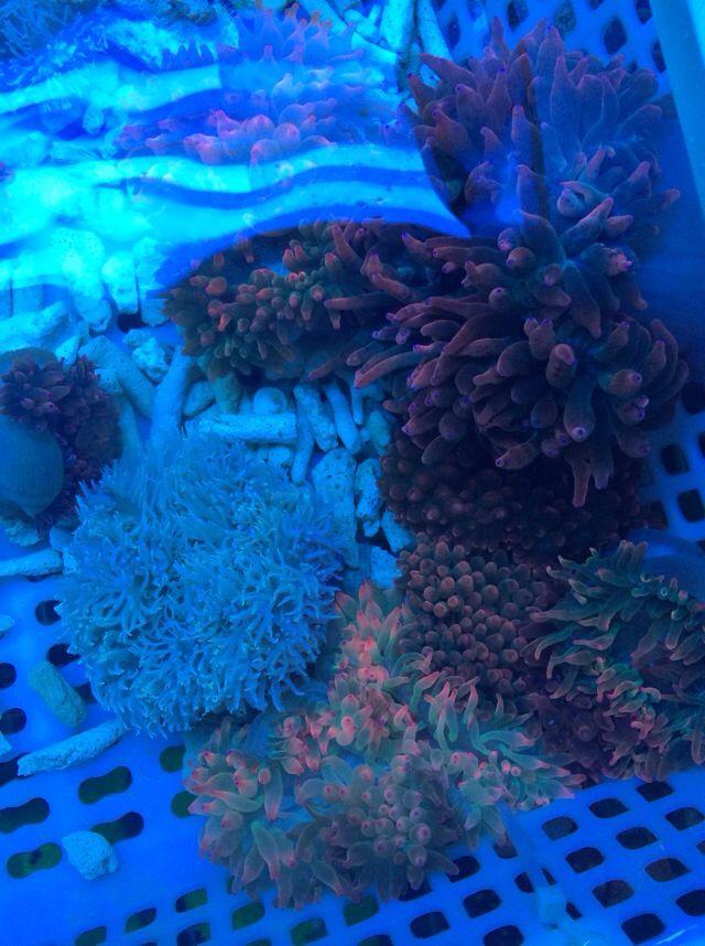 壁纸 海底 海底世界 海洋馆 水族馆 桌面 640_858 竖版 竖屏 手机
