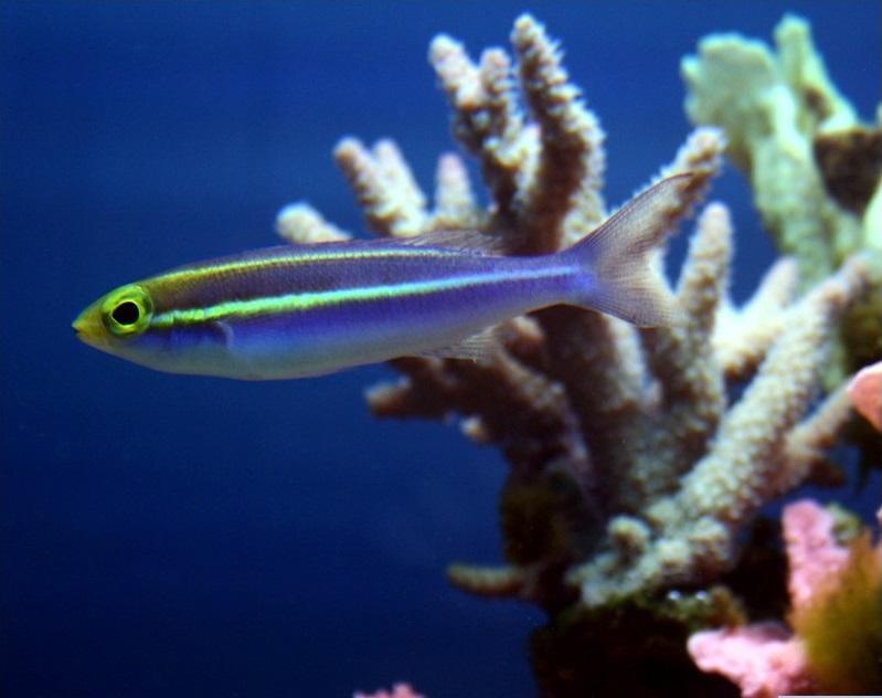 壁纸 动物 海底 海底世界 海洋馆 水族馆 鱼 鱼类 799_632
