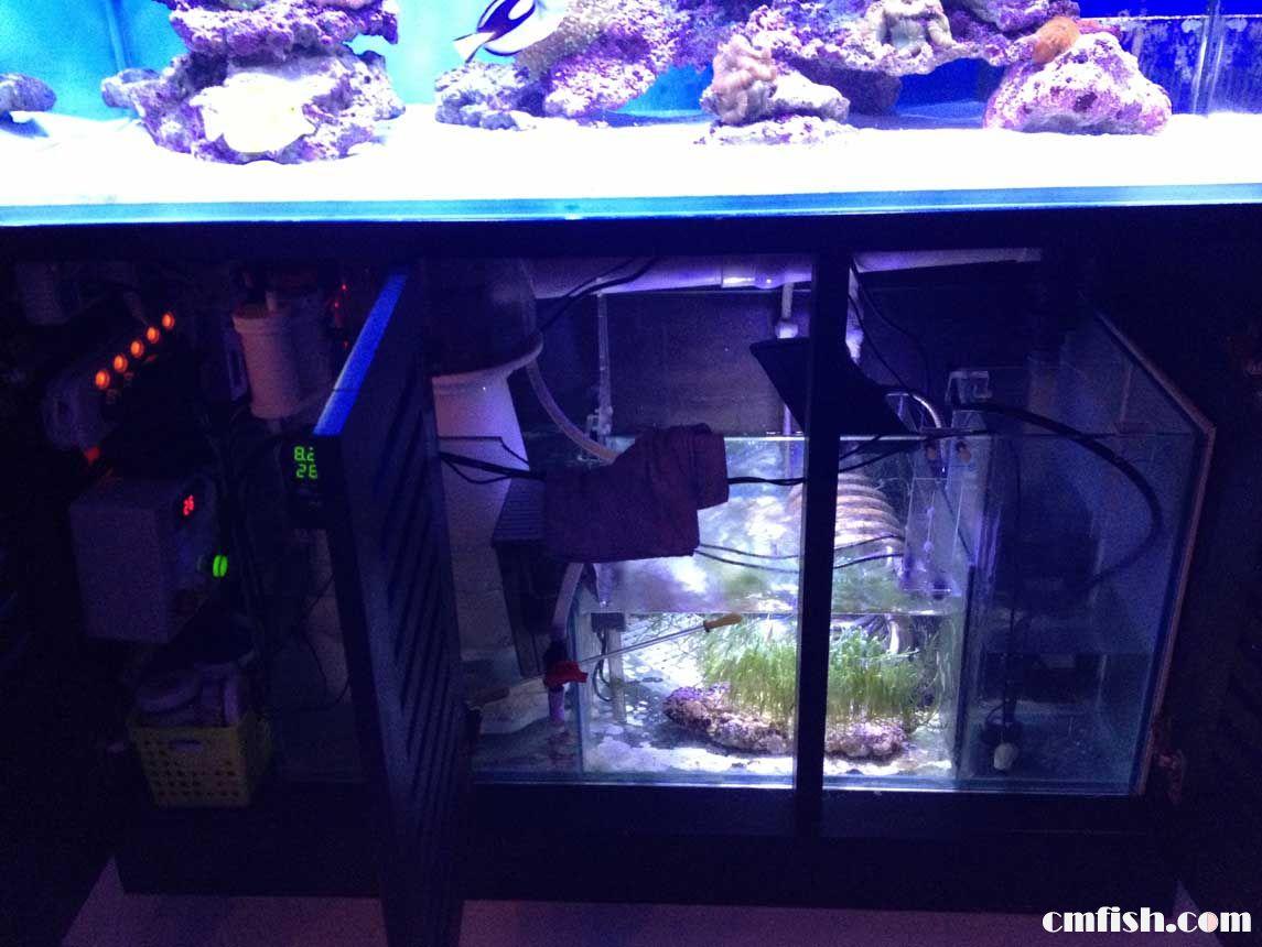海水缸开缸教程展示