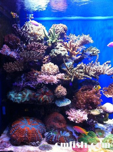 壁纸 海底 海底世界 海洋馆 水族馆 387_518 竖版 竖屏 手机