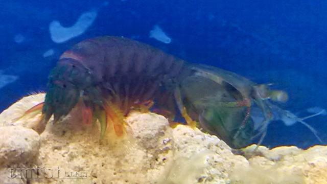 壁纸 动物 海底 海底世界 海洋馆 水族馆 鱼 鱼类 640_360