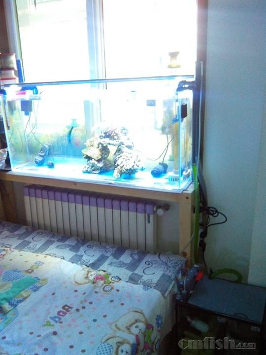 因陋就简,窗台上的小鱼缸 更新近况