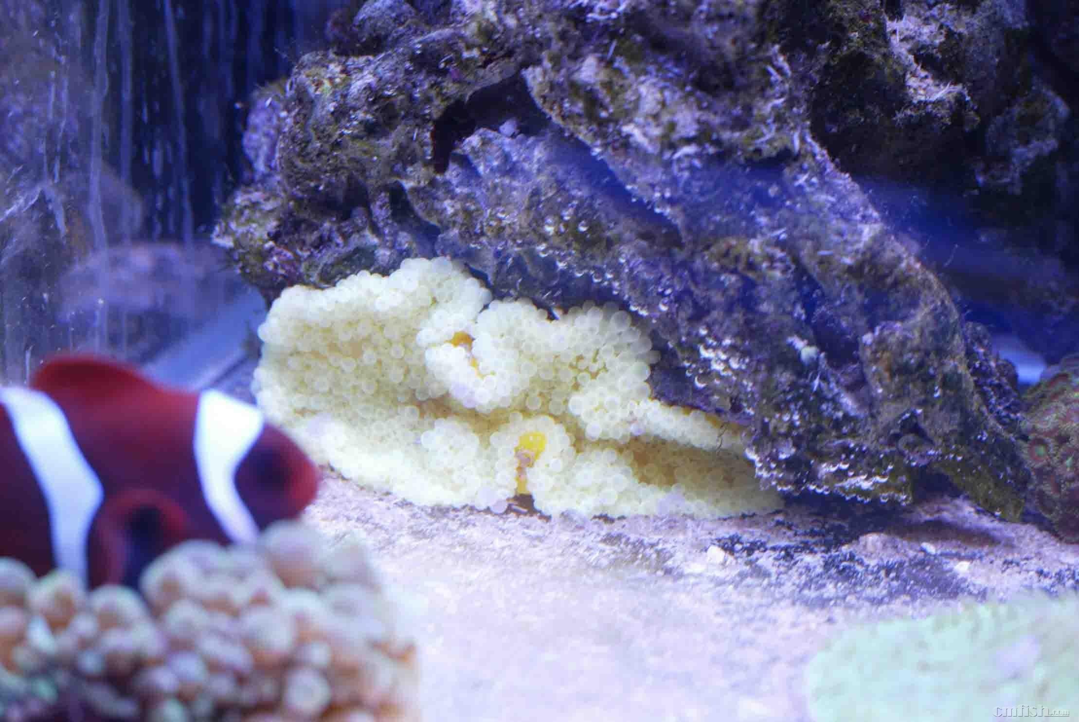 海葵闭合图片大全