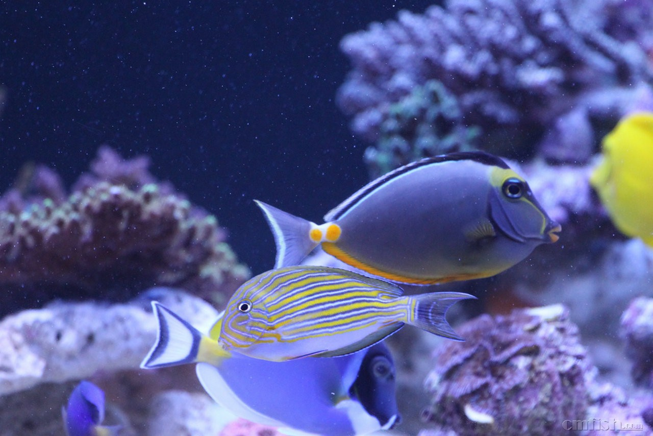 壁纸 动物 海底 海底世界 海洋馆 水族馆 鱼 鱼类 1280_854