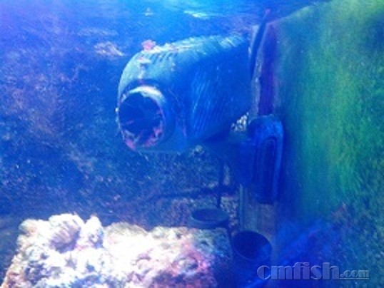壁纸 海底 海底世界 海洋馆 水族馆 桌面 538_404