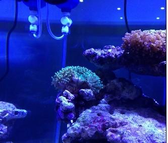 壁纸 海底 海底世界 海洋馆 水族馆 333_285