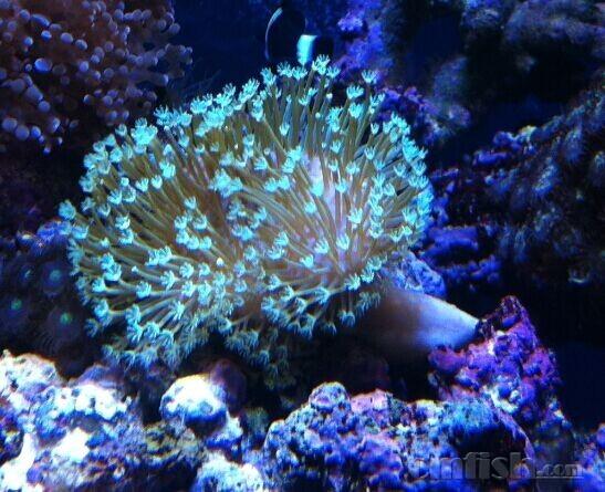 壁纸 海底 海底世界 海洋馆 水族馆 547_445