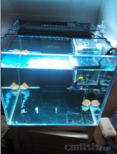 成品鱼缸改底滤双上水