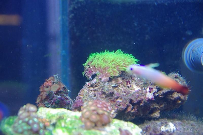 壁纸 海底 海底世界 海洋馆 水族馆 800_533