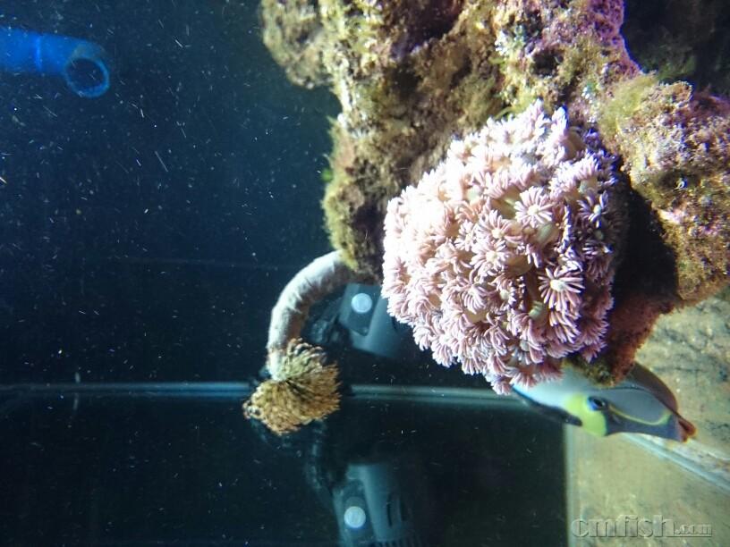 壁纸 海底 海底世界 海洋馆 水族馆 816_612