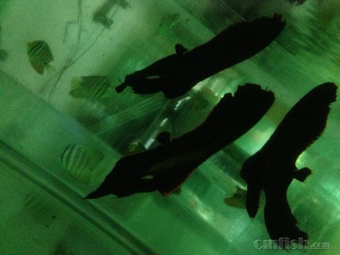 青岛海鱼的种类图片