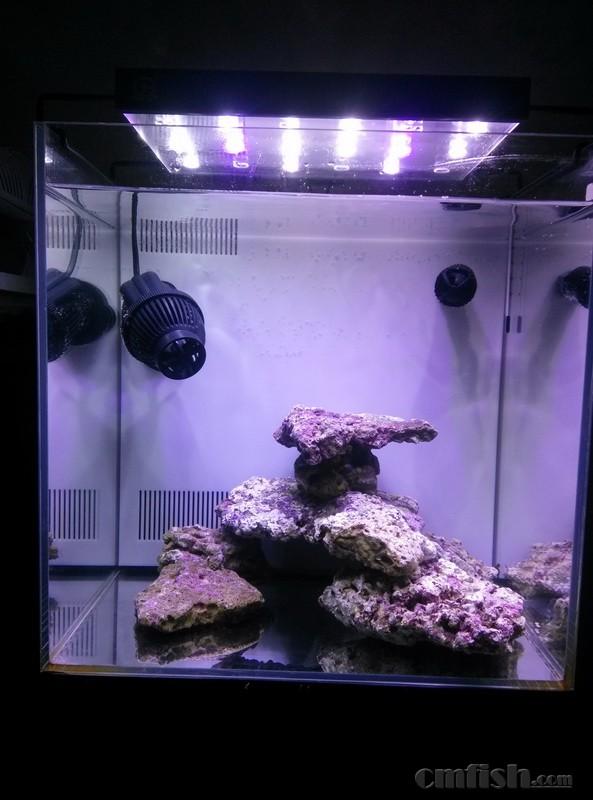 40水晶虾缸转海水缸记录一下