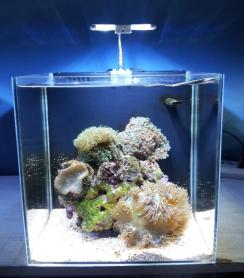 北京商家撤店甩卖,50x50的背滤超白海缸400元图片