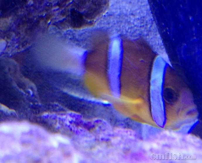 壁纸 动物 海底 海底世界 海洋馆 水族馆 鱼 鱼类 690_558