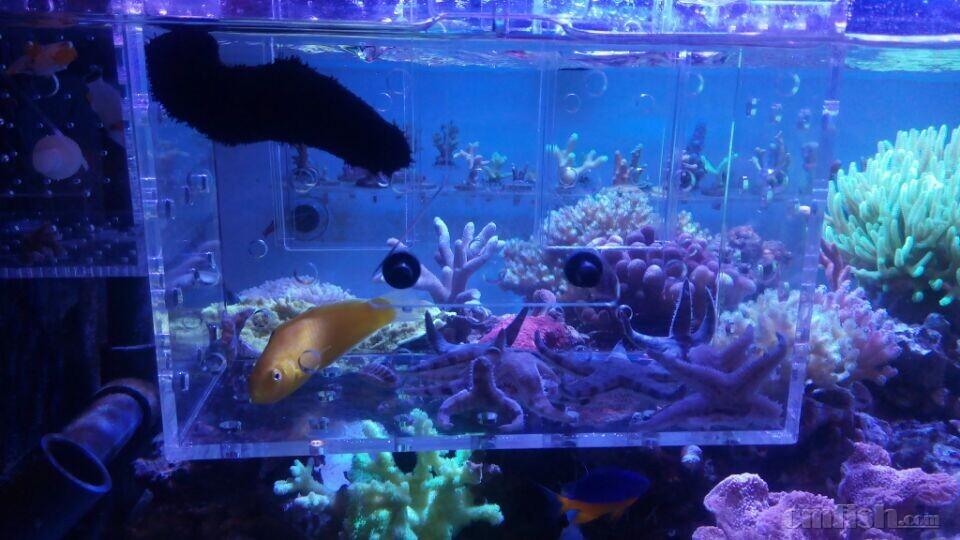 壁纸 海底 海底世界 海洋馆 水族馆 960_540