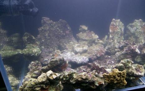 壁纸 海底 海底世界 海洋馆 水族馆 466_292