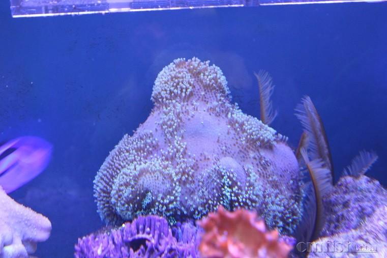 壁纸 海底 海底世界 海洋馆 水族馆 桌面 761_507