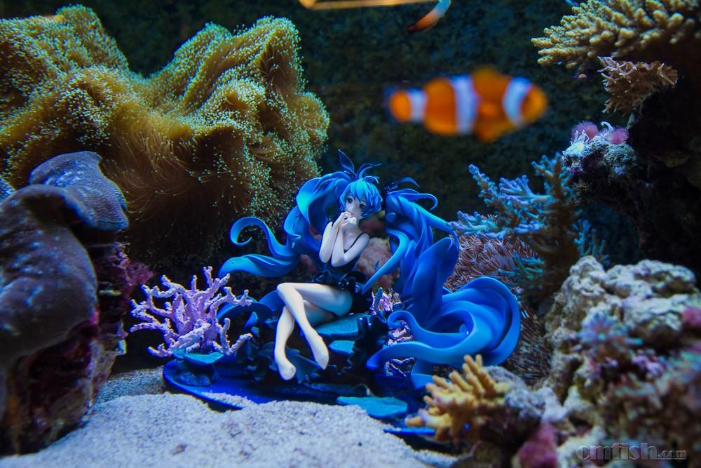 壁纸 海底 海底世界 海洋馆 水族馆 1000_667