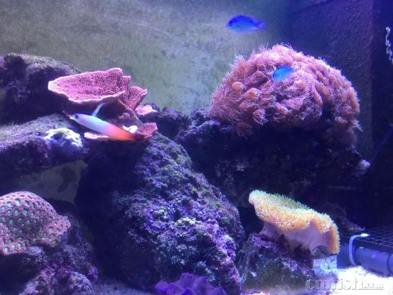 壁纸 海底 海底世界 海洋馆 水族馆 800_600