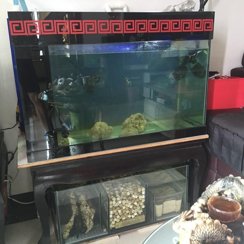 鱼缸用上水泵 - ◆初学者咨询(beginners)