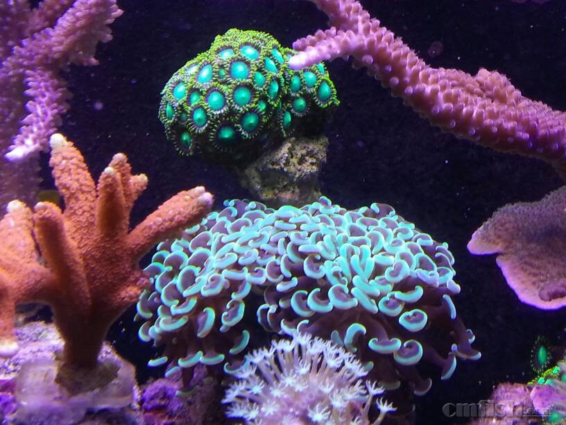 壁纸 海底 海底世界 海洋馆 水族馆 桌面 816_612