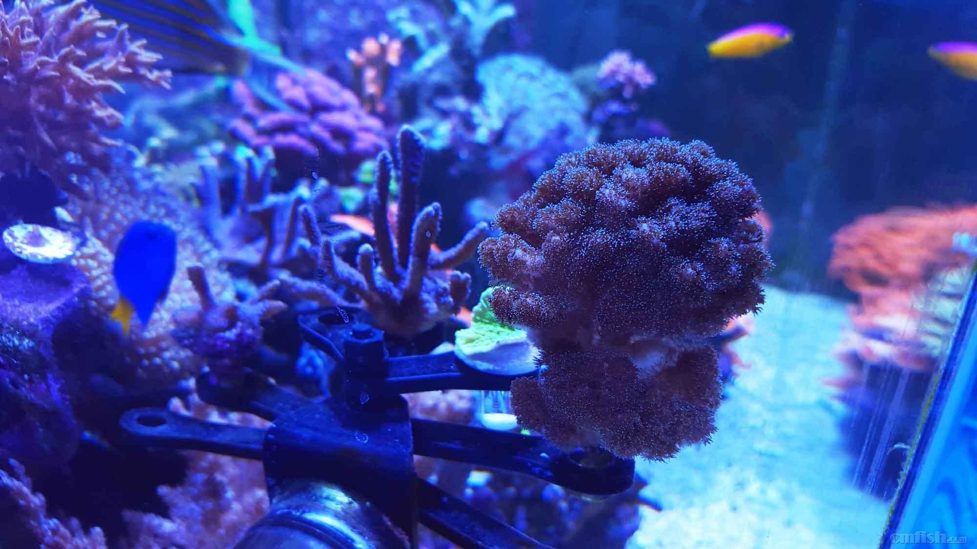 壁纸 海底 海底世界 海洋馆 水族馆 桌面 2000_1125
