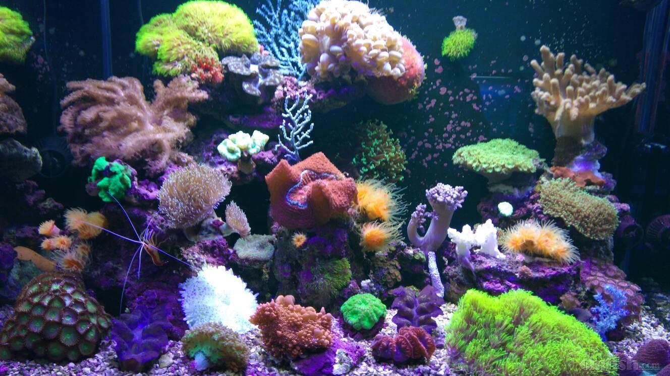 壁纸 海底 海底世界 海洋馆 水族馆 1328_747