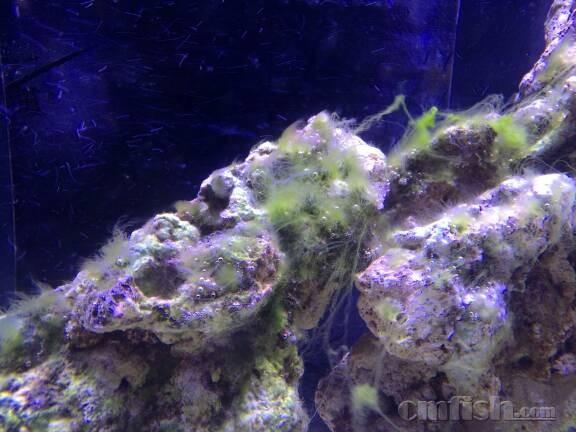 壁纸 海底 海底世界 海洋馆 水族馆 576_432