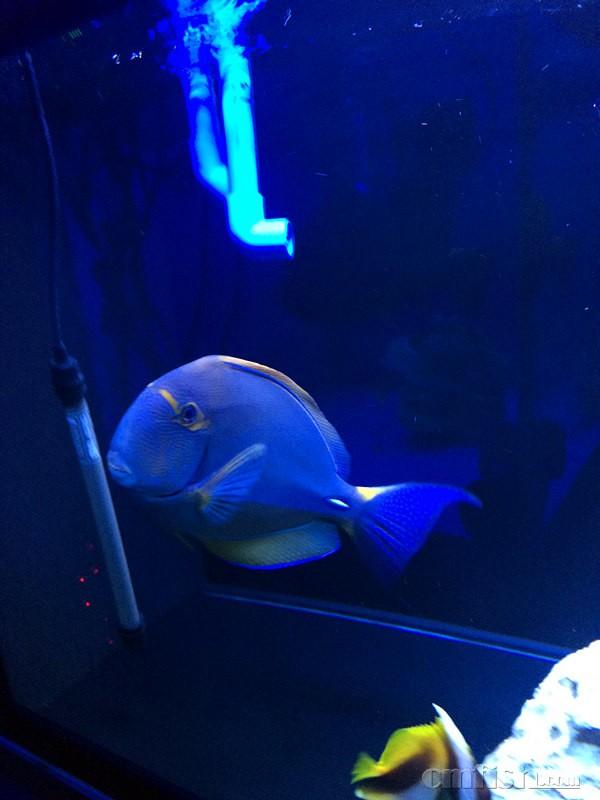 壁纸 动物 海底 海底世界 海洋馆 水族馆 鱼 鱼类 600_800 竖版 竖屏
