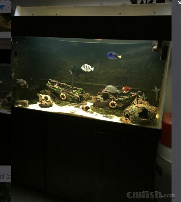 1.5米鱼缸布景-沈阳出售长1.5米宽0.7米高1.7米海缸,打包出售 有图片