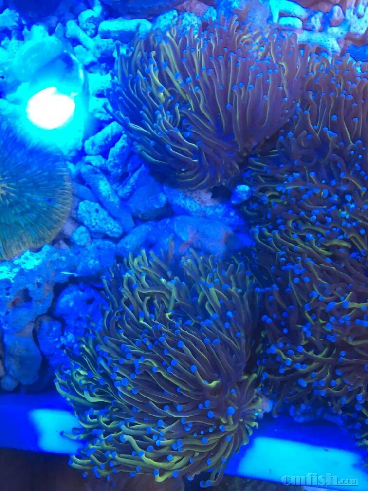 壁纸 海底 海底世界 海洋馆 水族馆 756_1008 竖版 竖屏 手机