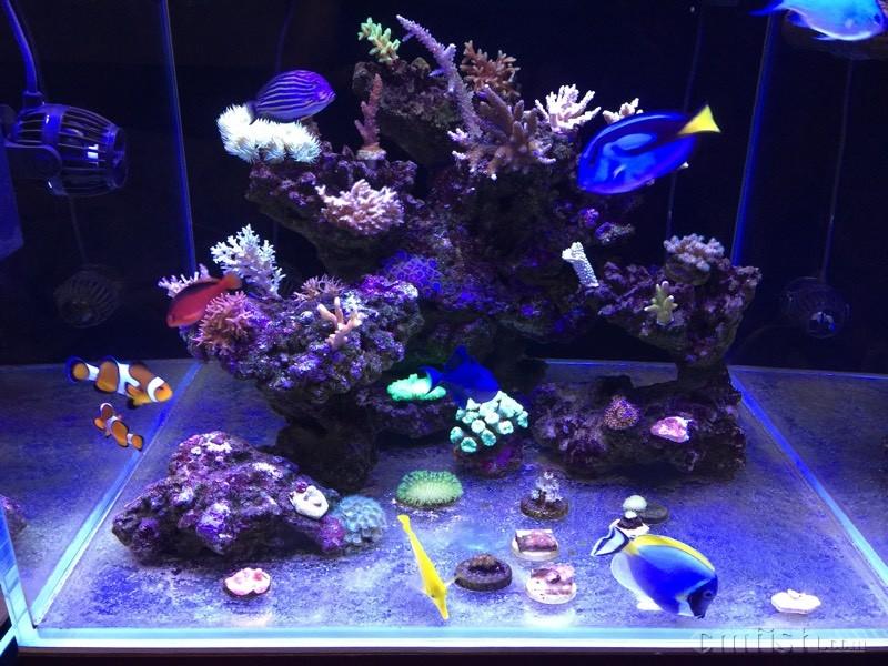 海水珊瑚底缸设计图