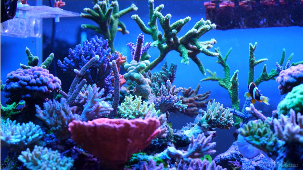 壁纸 海底 海底世界 海洋馆 水族馆 桌面 1188_666