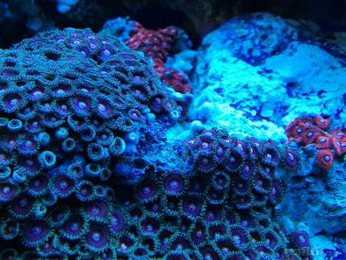 壁纸 海底 海底世界 海洋馆 水族馆 桌面 992_744