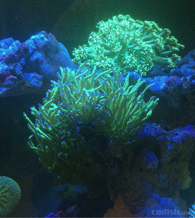 壁纸 海底 海底世界 海洋馆 水族馆 桌面 800_895
