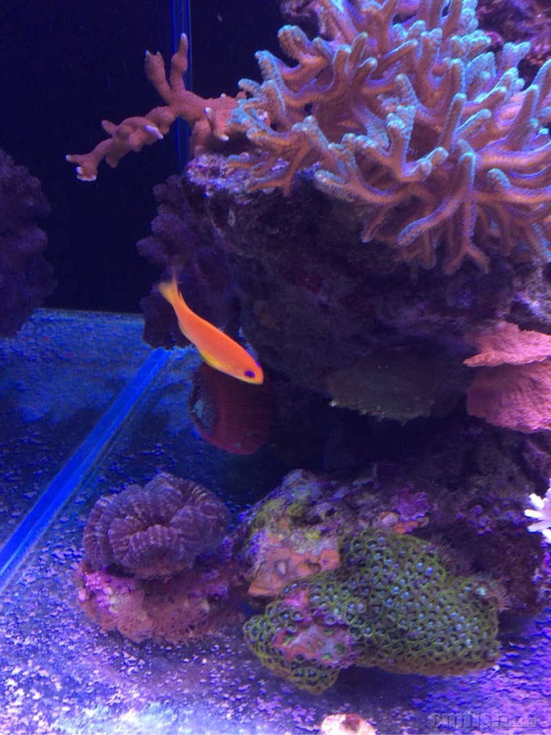 壁纸 海底 海底世界 海洋馆 水族馆 800_1067 竖版 竖屏 手机