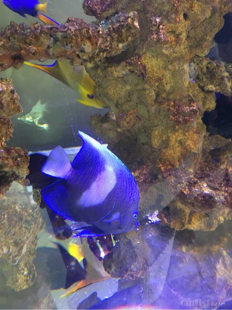 壁纸 海底 海底世界 海洋馆 水族馆 800_1068 竖版 竖屏 手机
