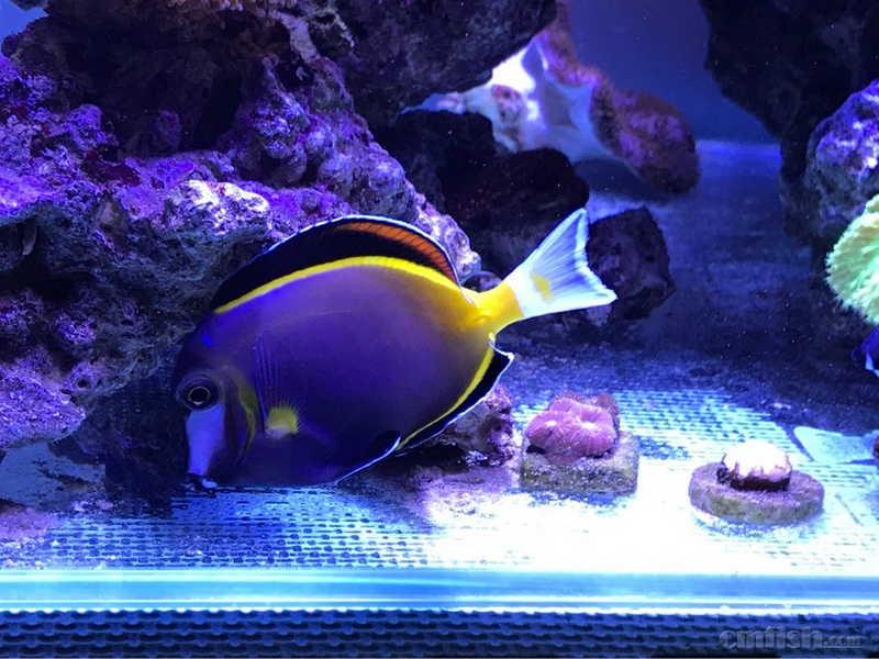 壁纸 海底 海底世界 海洋馆 水族馆 980_735