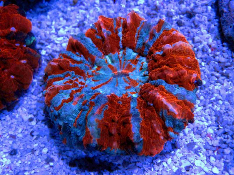 店内海水观赏鱼 珊瑚均为合法原产地进口 正规渠道直飞北京 欢迎