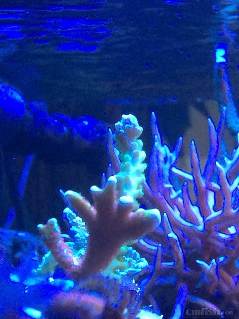 壁纸 海底 海底世界 海洋馆 水族馆 桌面 800_1067 竖版 竖屏 手机