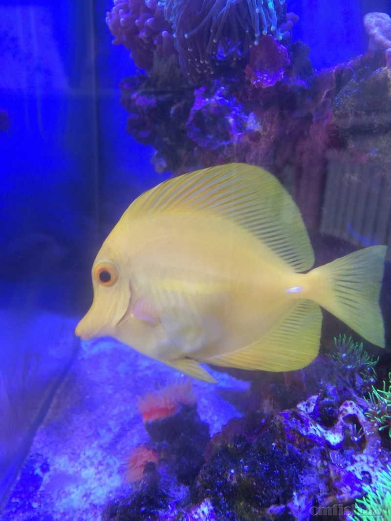 壁纸 动物 海底 海底世界 海洋馆 水族馆 鱼 鱼类 852_1136 竖版 竖