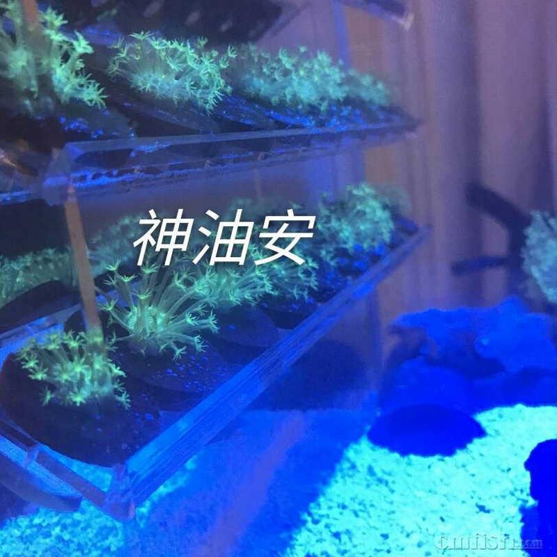 壁纸 海底 海底世界 海洋馆 水族馆 810_810