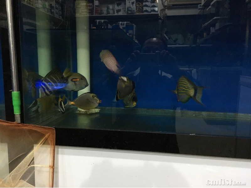 大鱼电子琴简谱和弦