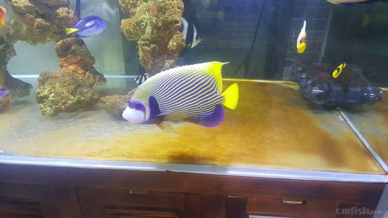 壁纸 动物 海底 海底世界 海洋馆 水族馆 鱼 鱼类 1328_747