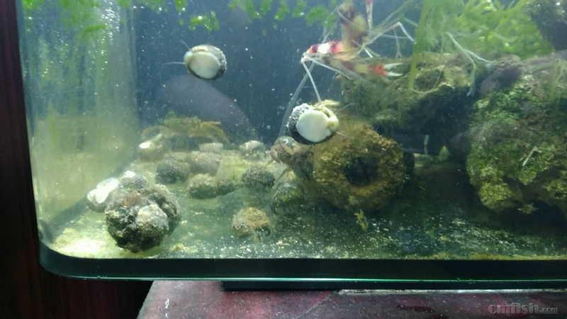 壁纸 海底 海底世界 海洋馆 水草 水生植物 水族馆 1280_720
