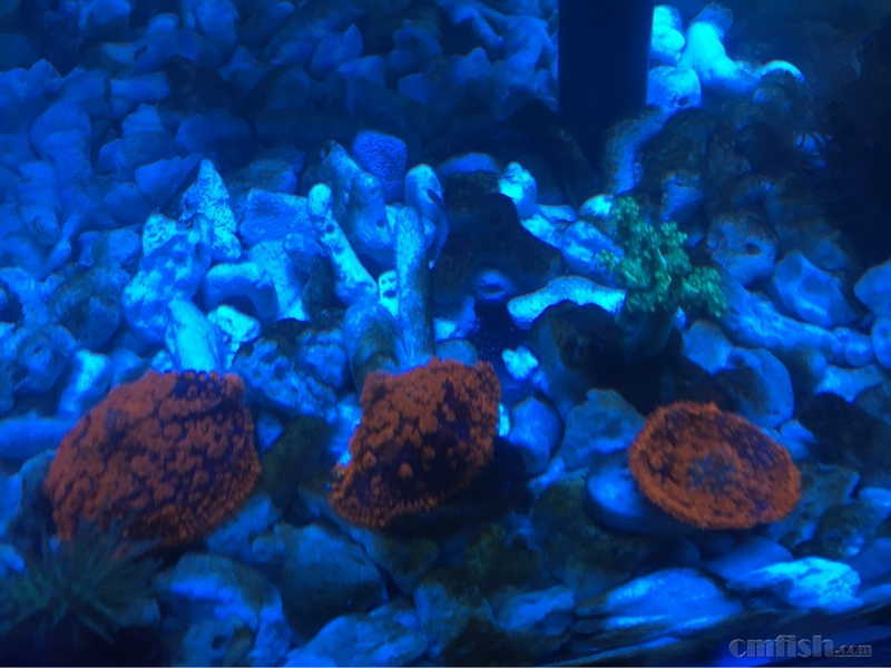 壁纸 海底 海底世界 海洋馆 水族馆 桌面 980_735